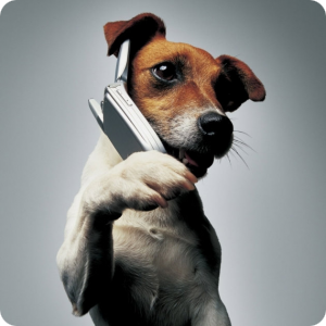 chien-telephone2